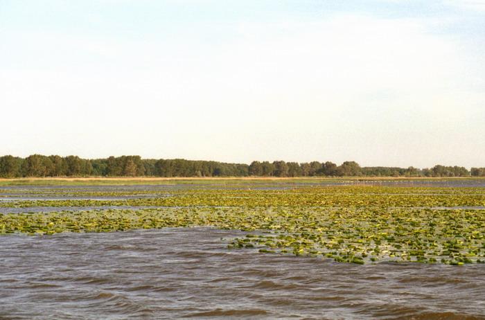 Zatoka Elbląska - kartoflisko