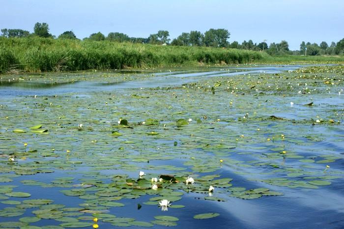 Wisła Królewiecka - moja ulubiona droga wodna na Zalew Wiślany